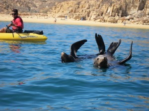 Sea Lions by The Los Cabos Arch