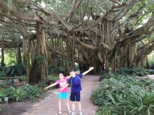Legoland Cypress Gardens Banyan Tree