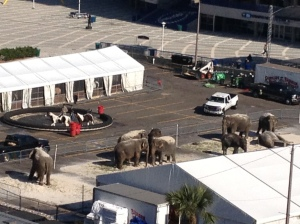 Ringling Brothers Circus Tampa