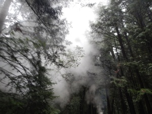 Steam in the Redwoods